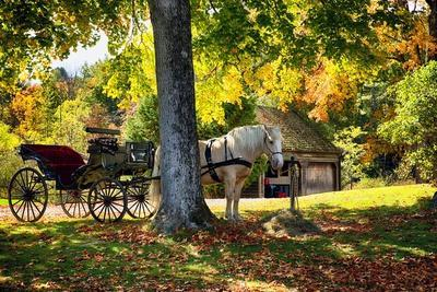 Horse-drawn Carrieage Under A Tree