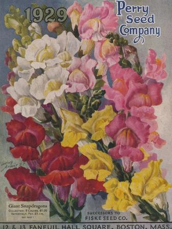 Giant Snapdragons, Perry Seed Company