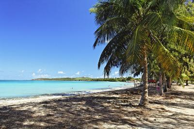 Palm trees on Seven Seas Beach