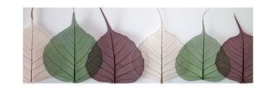 Leafy Address