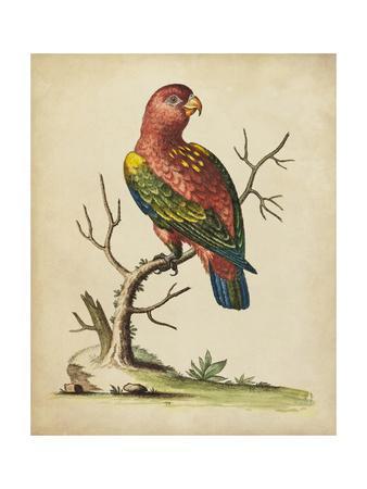 Edwards Parrots IV