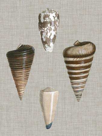 Shells on Linen III