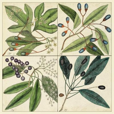 Catesby Leaf Quadrant I