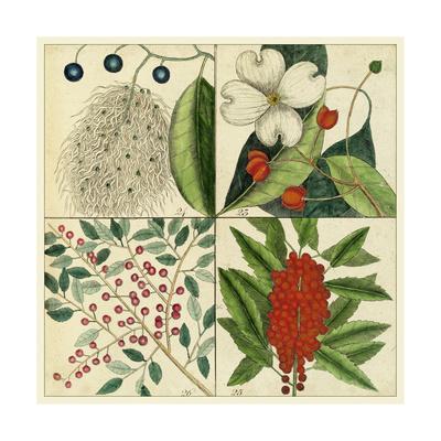 Catesby Botanical Quadrant II