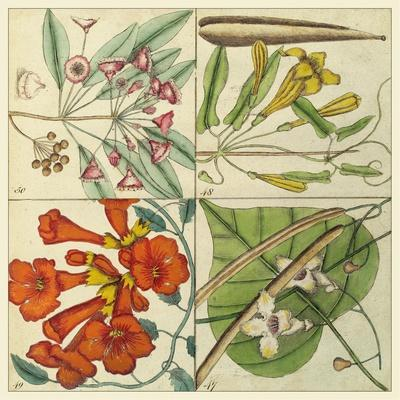 Catesby Botanical Quadrant III