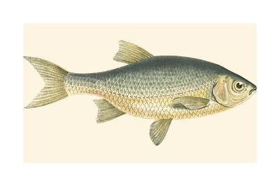 Small Antique Fish IV