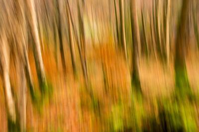 Abstract Shot of Autumnal Woodland in Grasmere, Lake District Cumbria England Uk