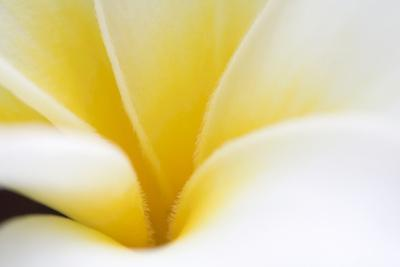 Abstract Close Up of the Petals of a White and Yellow Flower