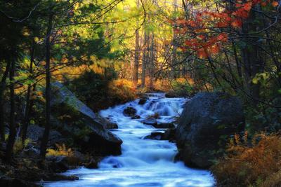 A Stream with Small Waterfalls Rushing Through a Forest in Autumn Colors