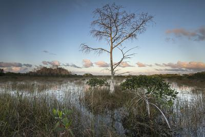 Dwarf Mangrove Trees and Brackish Water in Florida's Everglades National Park