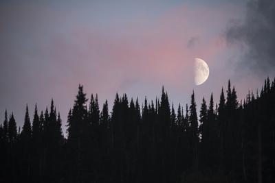 A Half Moon Above Evergreen Trees in Montana's Glacier National Park