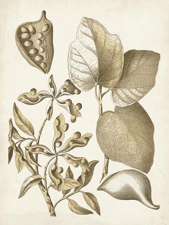 Ochre Botanical III