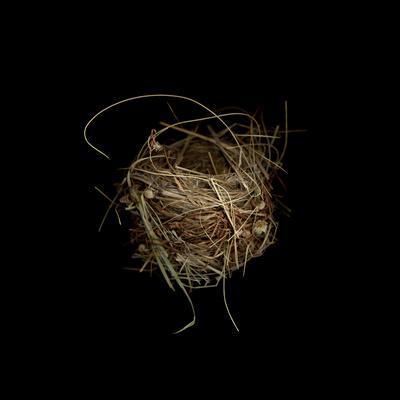 Construction 7: Birds Nest