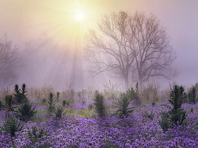 Foggy sunrise, South Llano River State Park, Texas