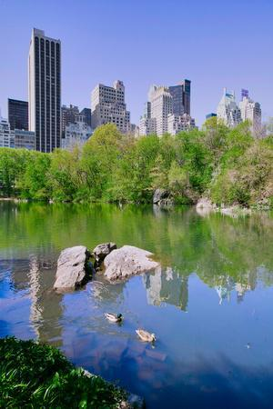Lake and two ducks in Central Park in Spring with skyline in background, New York City, New York
