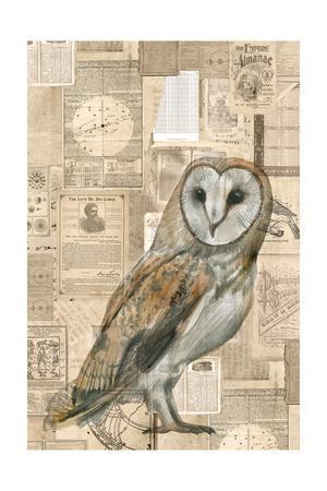 Academic Owl Illustration
