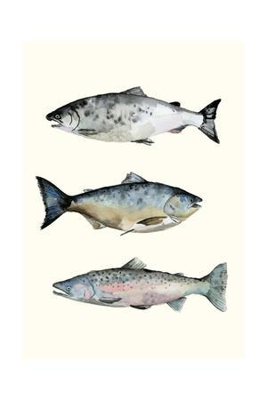 Fish Grouping 3
