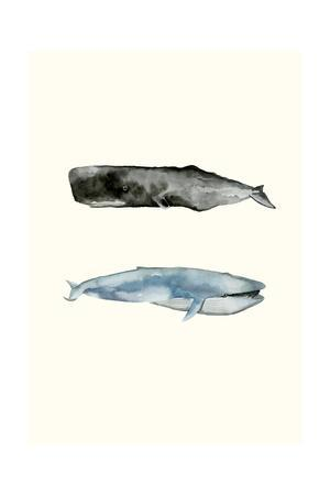 Whale Grouping 2