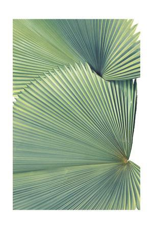 Contemporary Palm Leaves 3