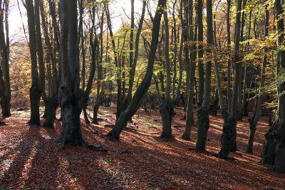 Epping Forest, Epping, Essex, England, United Kingdom, Europe