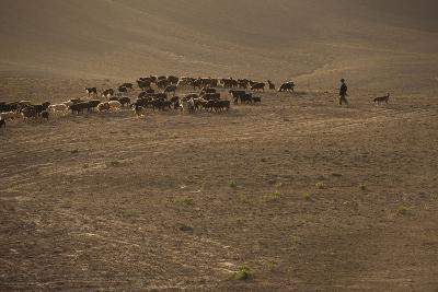Shepherds and their flocks walk long distances in barren hills, Afghanistan
