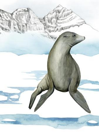 Arctic Animal IV
