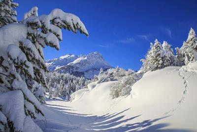 The winter sun shines on the snow covered woods and the landscape around Maloja Canton of Engadine