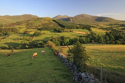 Mourne Mountains, County Down, Ulster, Northern Ireland, United Kingdom, Europe
