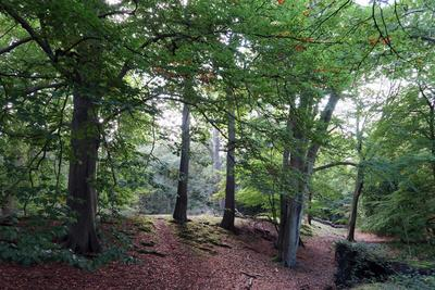 Ambresbury Banks, remains of an Iron Age hill fort in Epping Forest, Essex, England, United Kingdom