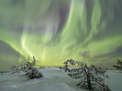 Panorama of snowy woods and frozen trees framed by Northern lights (Aurora Borealis) and stars, Lev