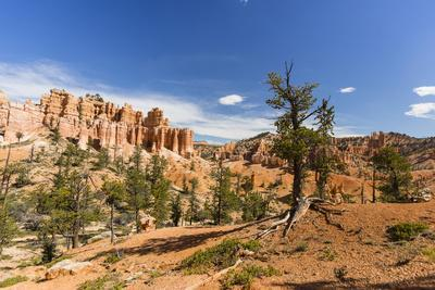 View of hoodoo formations from the Fairyland Trail in Bryce Canyon National Park, Utah, United Stat