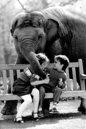 Elephant Having a Bite