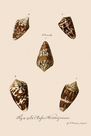 Five Cone Shells