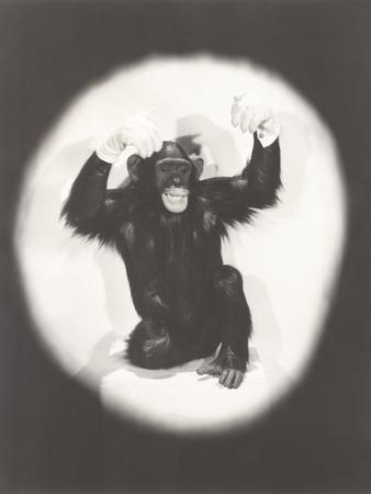 Monkey Doing an Al Jolson Imitation
