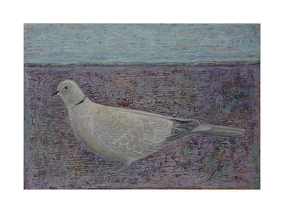 I am the Collared Dove