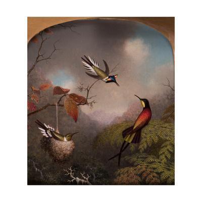 Hummingbirds: Two 'Sungems' and a 'Crimson Topaz', 1866