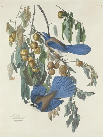 Florida Jays, 1830