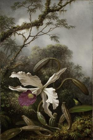 Hummingbird with White Orchid, 1875-1885