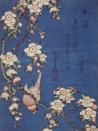 Bullfinch and weeping cherry-tree, pub. c.1834