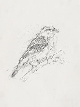Avian Study  II