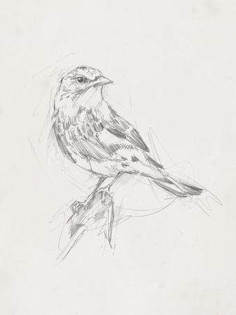 Avian Study  I