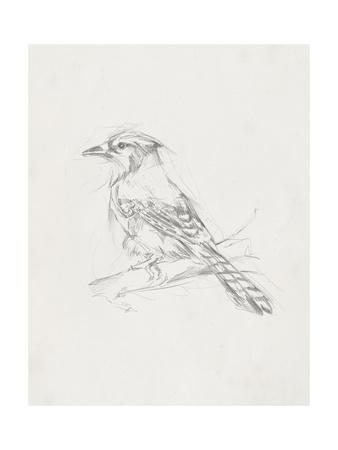 Avian Study  IV