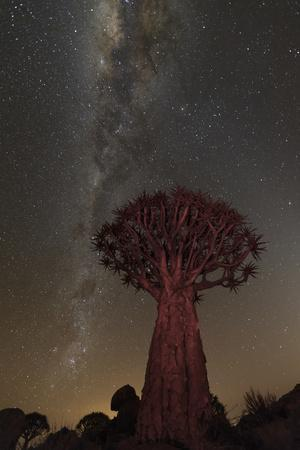 Quiver Tree, Namibia 2