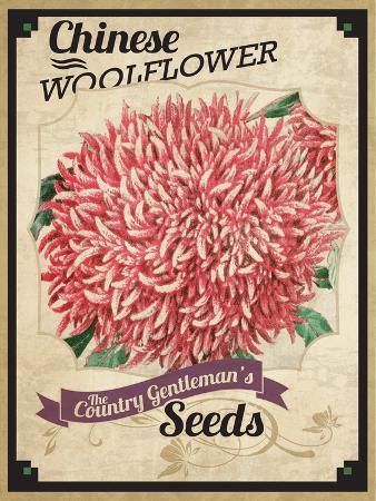 Seed Packet - Woolflower