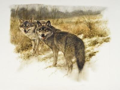 de aanloop wolf