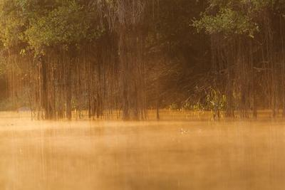 Brazil, The Pantanal, Rio Cuiaba. The mist rises off the river in the early morning.