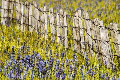 USA, Idaho, Fairfield, Camas Prairie, Creek and fence in the Camas Prairie