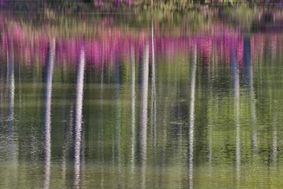 Tree trunks and azaleas reflected in calm pond, Georgia