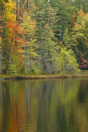 Fall colors on shoreline of Irwin Lake, Hiawatha National Forest, Alger County, Michigan.