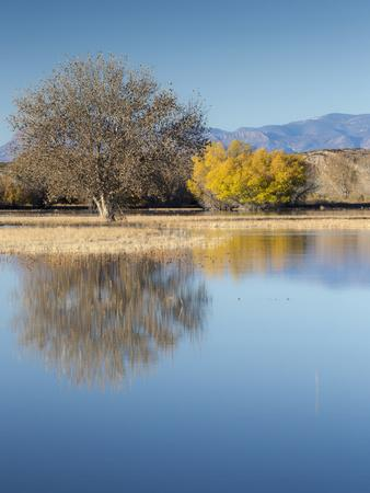 Bosque del Apache National Wildlife Refuge, fall, New Mexico